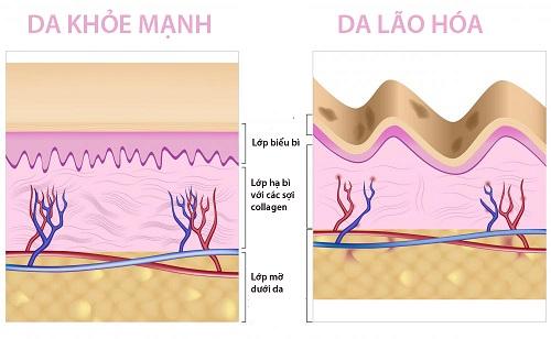 Tinh chất Collagen Q10, chống lão hóa
