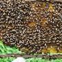 cac-cau-ong