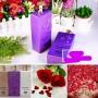 Sua Tam COCO Perfume Charming Shower GEL (3)